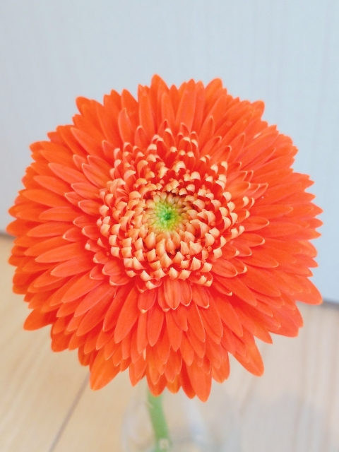 ガーベラオレンジ